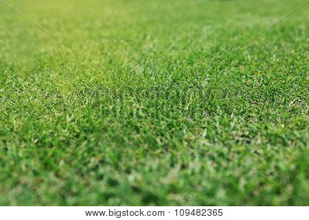 Green grass golf course background