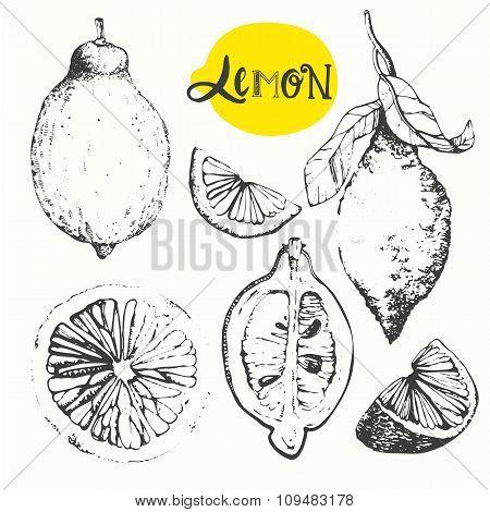 Lemon. Set of hand drawn lemon. Fresh organic food.