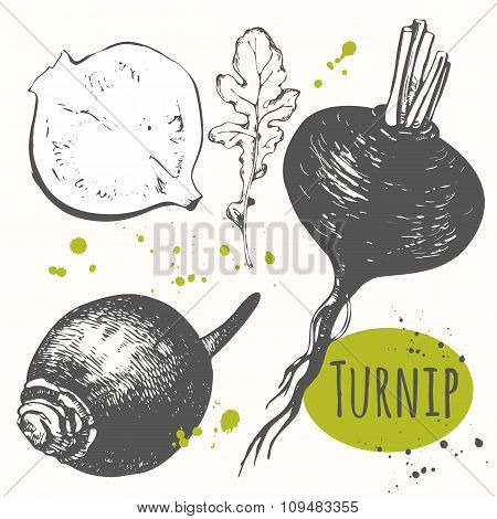 Set of hand drawn turnips. Black and white sketch food.
