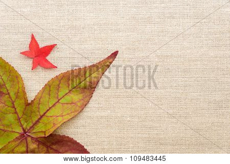 Fall color on a clean background