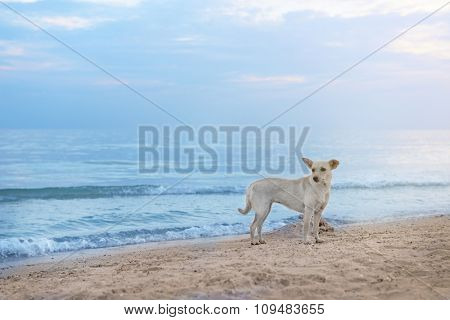 Cute dog on the beach