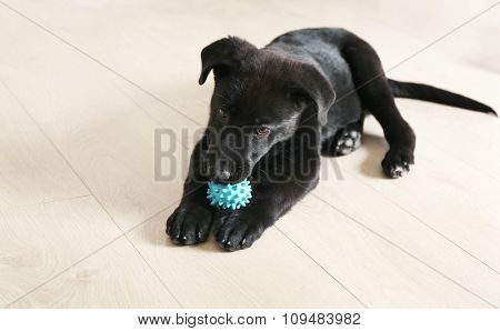 Cute black retriever on the floor