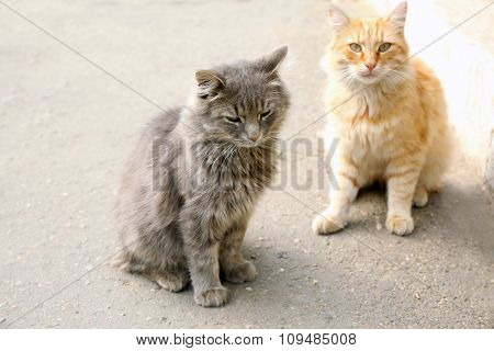 red cat and grey cat in the park