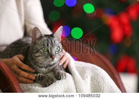Beautiful cat on Christmas tree background