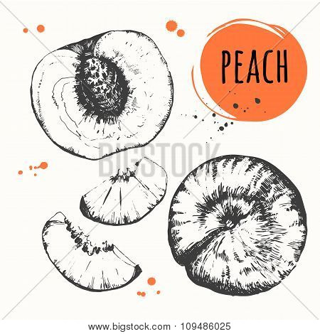 Peach. Vector illustration with sketch fruit.