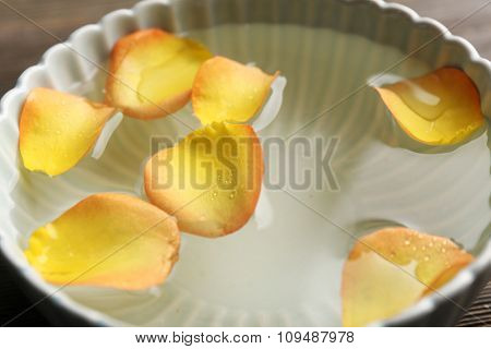 rose petals in a bowl of water, close-up