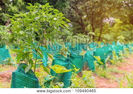 Young Plant A Tree In Agricultural Farm