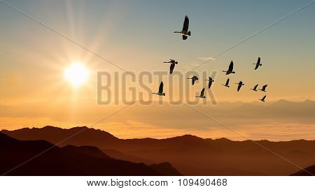 Autumn Migration Of Cranes Panoramic View