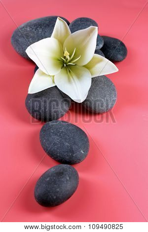 Spa stones with flower on pink background