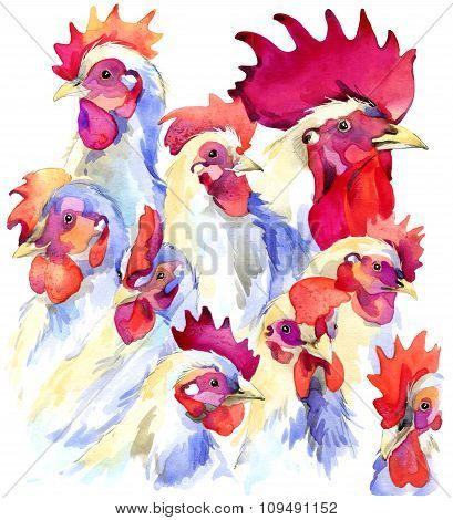 White rooster and chicken graphics Chicken Farm watercolor background. rooster illustration with spl