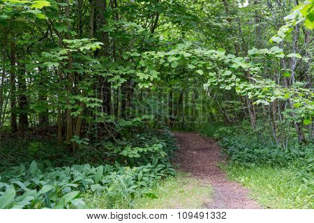 nature, season and environment concept - summer forest and path
