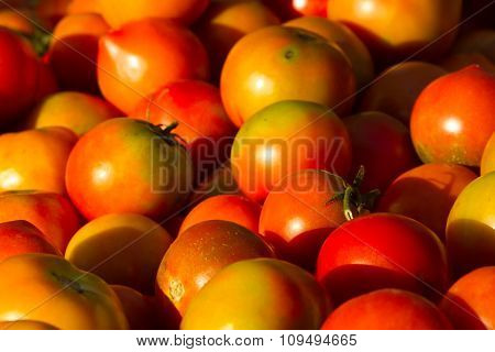 Background of groups of mature tomato market. Agriculture