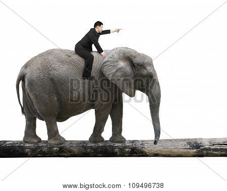 Man With Pointing Finger Riding Elephant Walking On Tree Trunk