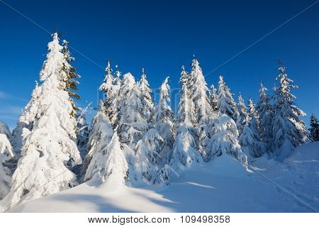 A frosty and sunny day is in mountains. Christmas scene