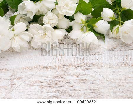 English Dogwood On The White Background