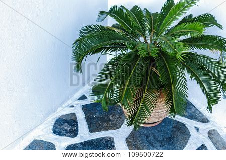 A small palm tree in flowerpot