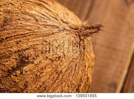 Whole Coconut, Close Up