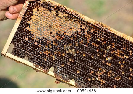 honeycomb on wooden frame close-up
