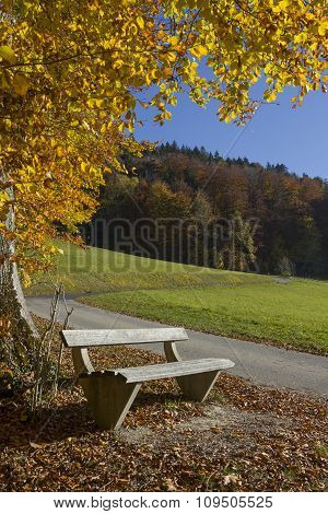 Peaceful Place With Bench, Colorful Beech Tree In Autumn