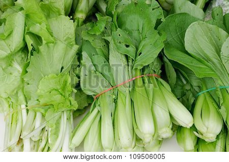 The chinese flowering cabbage with elastic band