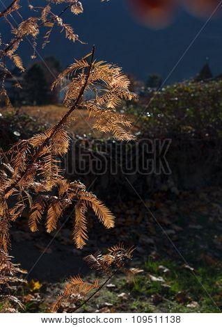 Autumn Tree On The Sun.