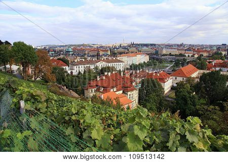 Vineyard Of Prague