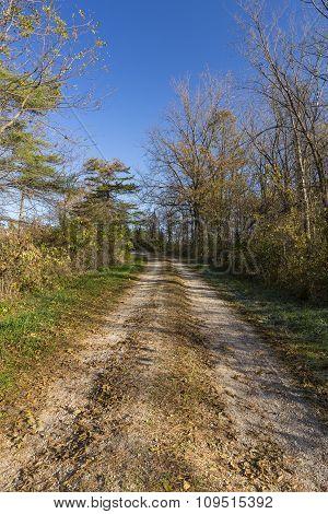 Autumn Road In Woods
