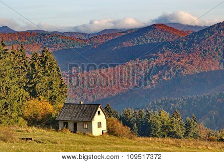 old abandoned house and colorful dense forest in autumn time