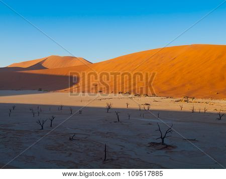 Dead acacia trees in red dunes of Sossusvlei