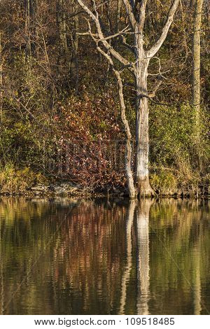 Chester Lake Scenic