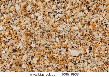 Natural Background Of Small Shells