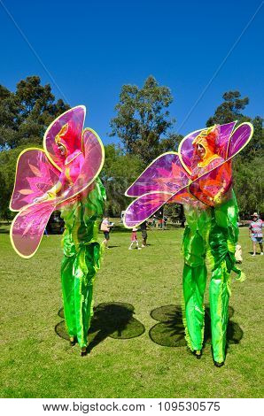 Fairy Stilt Walkers: King's Park, Perth