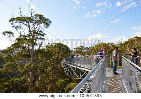 Tree Top Walk: Forest Canopy, Western Australia