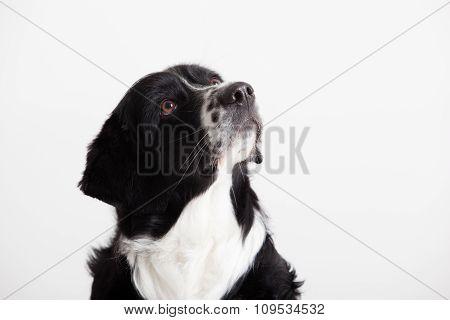 Sweet Dog Portrait