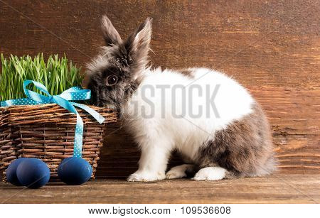 cute little rabbit with easter eggs
