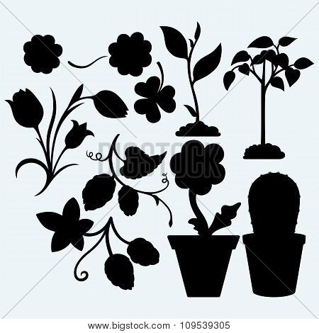 Set plants