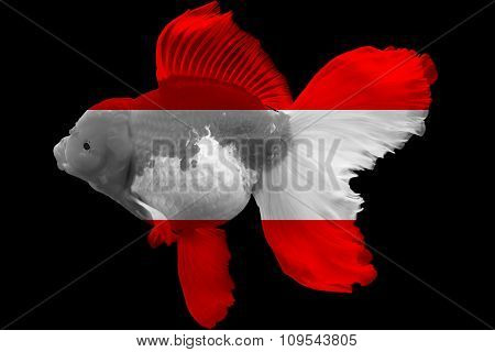 Flag of Austria on goldfish
