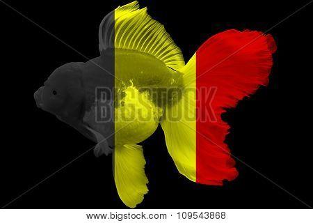Flag of Belgium on goldfish