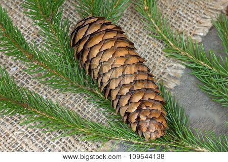 branches and pine cone