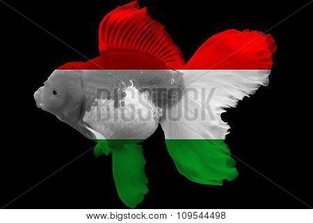 Flag of Hungary on goldfish