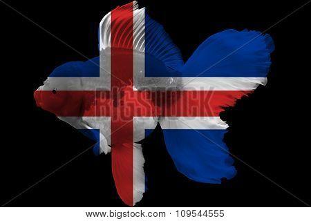 Flag of Iceland on goldfish