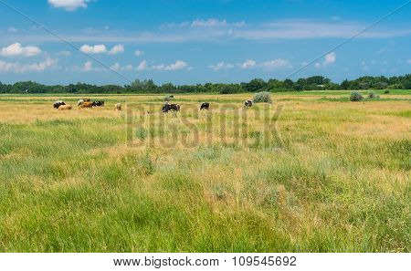 Ukrainian country landscape with meadow and herd at summer time