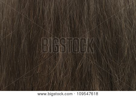Background Brown Hair