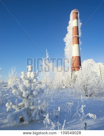 Small Pine Tree In Snow And Pipe On The Smoke.