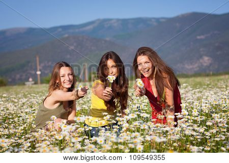 Three girls on camomile field