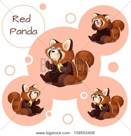 Cute red Panda with nuts