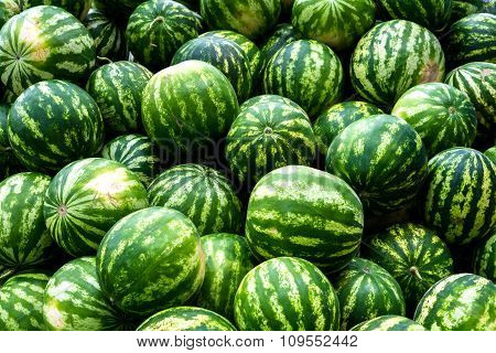 Screensaver From Heap Of Green Watermelons