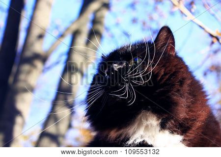Muzzle Of Black Whiskered Cat