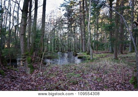Little Woodland Lake In The Forrest