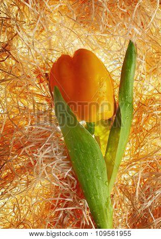 Creative tulip from pepper